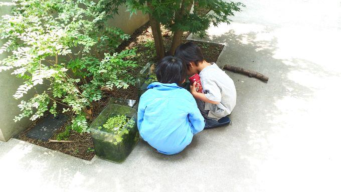 屋外水槽を子供達が覗く