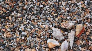 メダカ水槽の土や砂利の種類をご紹介 ~選び方と、敷く厚さについて~