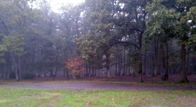 ホウリーウッズ久留里キャンプ村 オートサイトからフリーサイトの森を臨む
