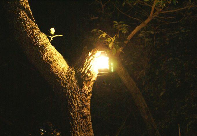 ジェントス EX-1000Cの明るさイメージ 木に吊るす