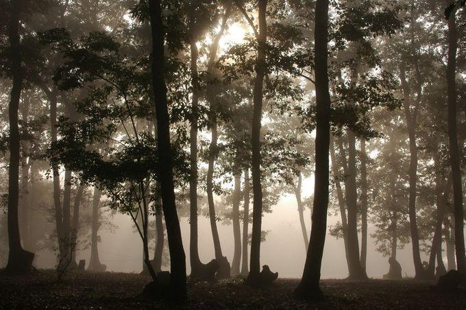 ホウリーウッズ久留里キャンプ村 風景