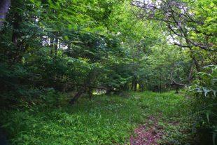 道志の森キャンプ場2