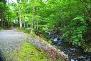道志の森キャンプ場3