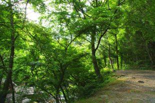 道志の森キャンプ場6