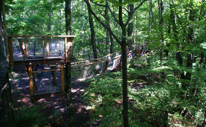 樹上アスレチックは森に囲まれている