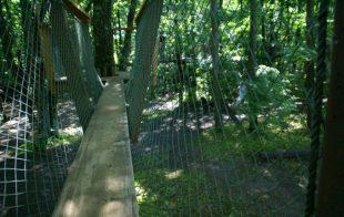 樹上アスレチックは高い