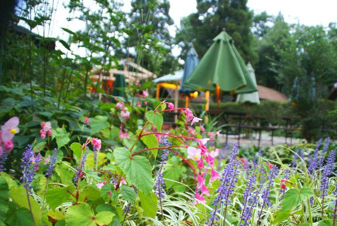 キャンプ・アンド・キャビンズ那須高原の花壇