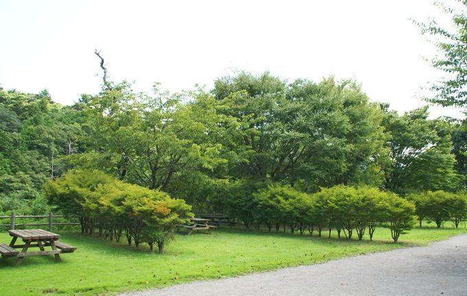 稲ヶ崎キャンプ場 オートサイト3