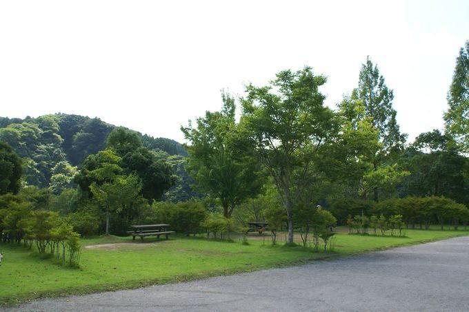 稲ヶ崎キャンプ場 オートサイト4