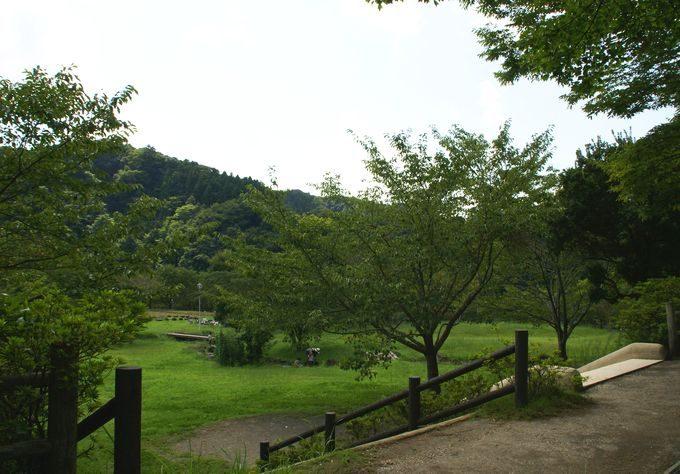 稲ヶ崎キャンプ場 自由広場1