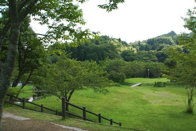 稲ヶ崎キャンプ場 自由広場2
