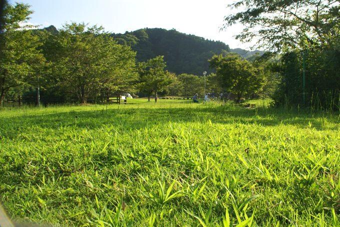 稲ヶ崎キャンプ場 自由広場5