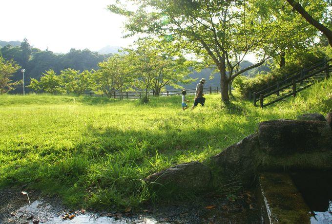 稲ヶ崎キャンプ場 自由広場の小川3