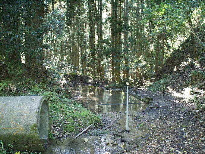 ザリガニ池(南側)