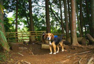 オートキャンプ・フルーツ村のポッキー(犬)