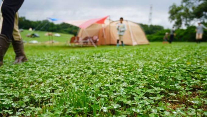 雨キャンプで濡れた草