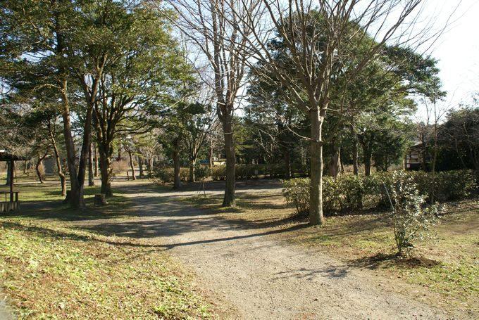 イレブンオートキャンプパーク サイト風景3