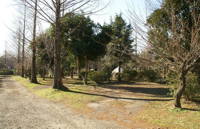 イレブンオートキャンプパーク サイト風景8