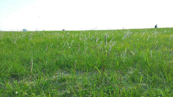 葛西海浜公園の草原