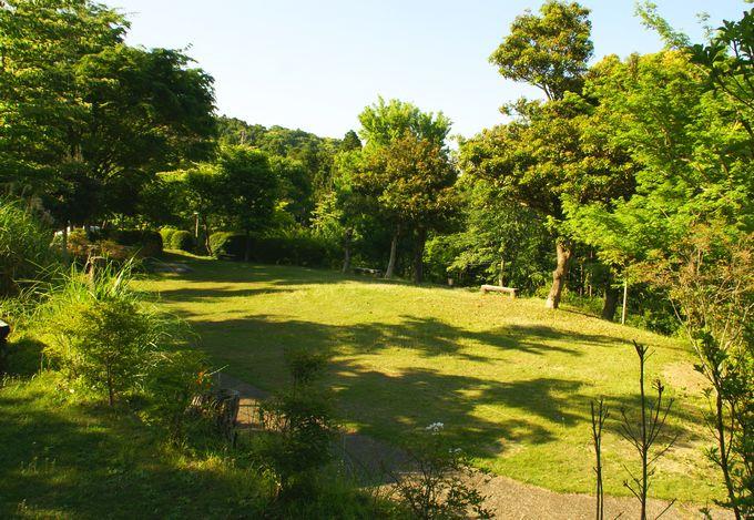 オートキャンプ場志駒の東エリアの上段