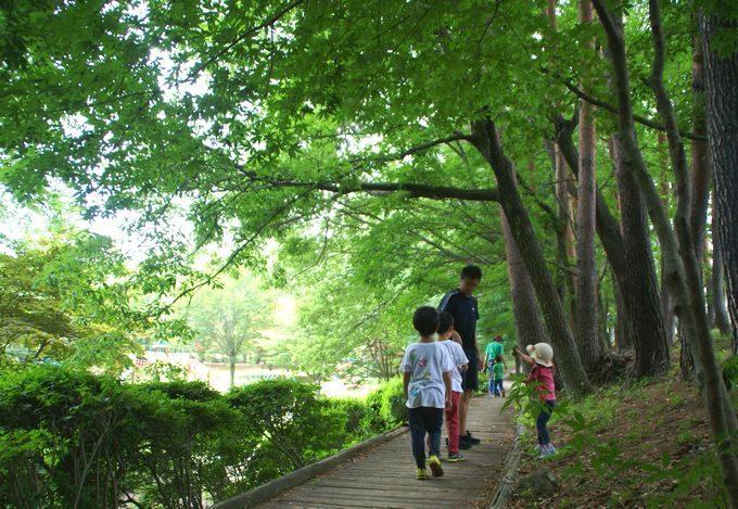 河口湖総合公園の林道