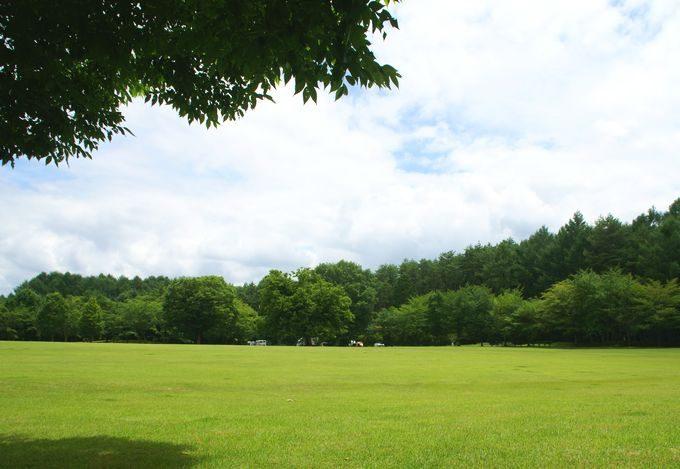 河口湖総合公園の芝生広場
