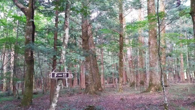 テントサイト電源なし の奥は林で眺めが良い