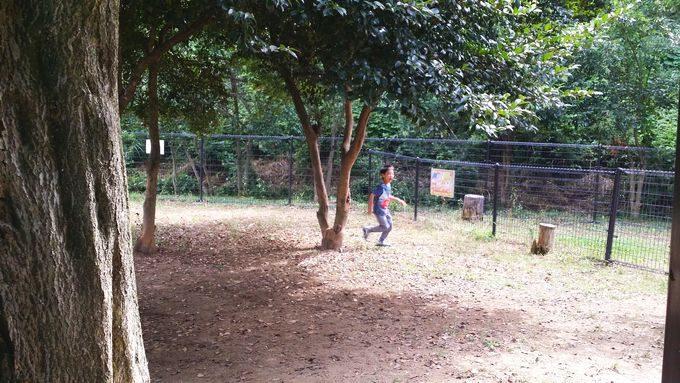 境川SAのドックランで長男が遊ぶ