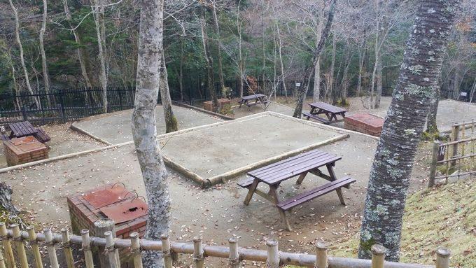 清和県民の森 キャンプサイト