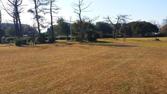 市原市海釣り施設の芝生広場