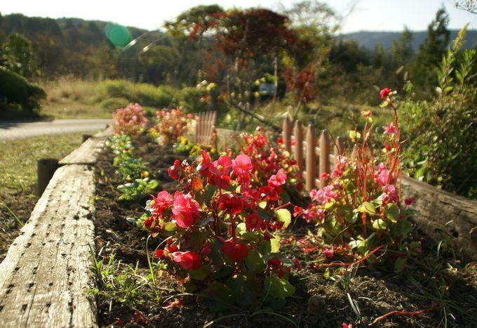 柿山田オートキャンプガーデンの花(赤)