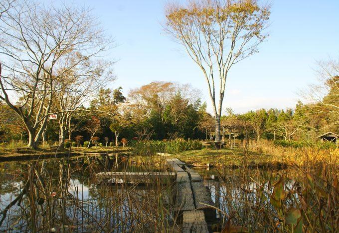 柿山田オートキャンプガーデンの池の通路