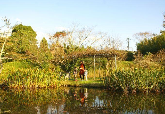 柿山田オートキャンプガーデンで池ポチャ