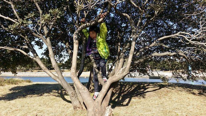 葛西海浜公園で木登り