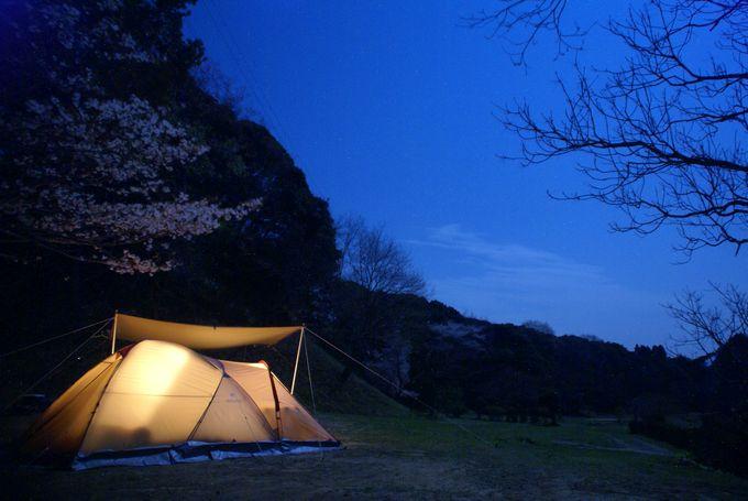 夜桜とアメニティドーム