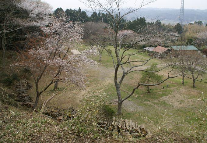 大原上布施オートキャンプ場 上段サイト 中央上部からの眺め