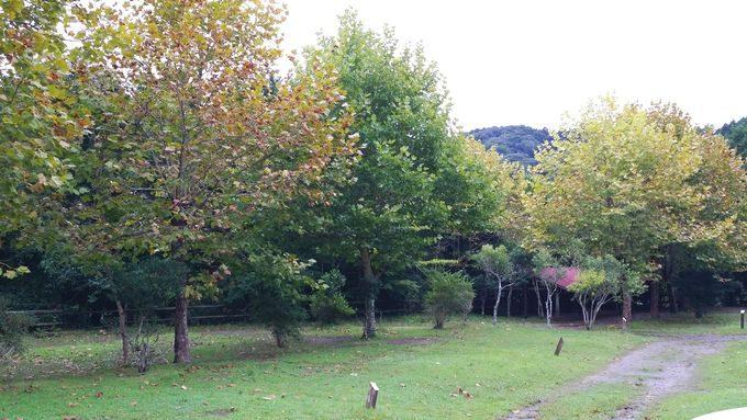 ロマンの森オートキャンプ場 サイト1