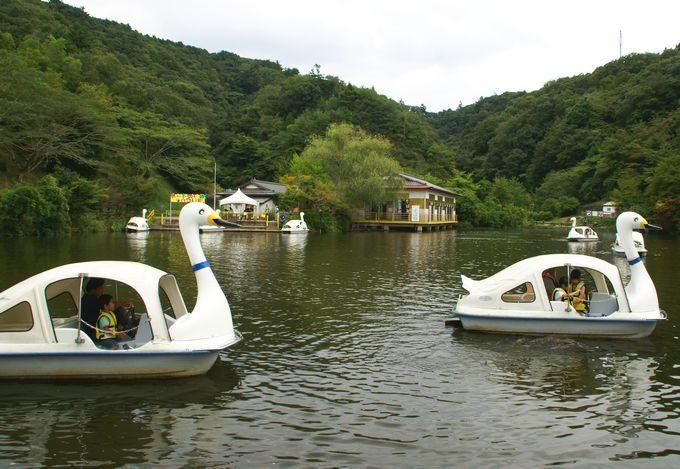 ロマンの森共和国 スワンボート