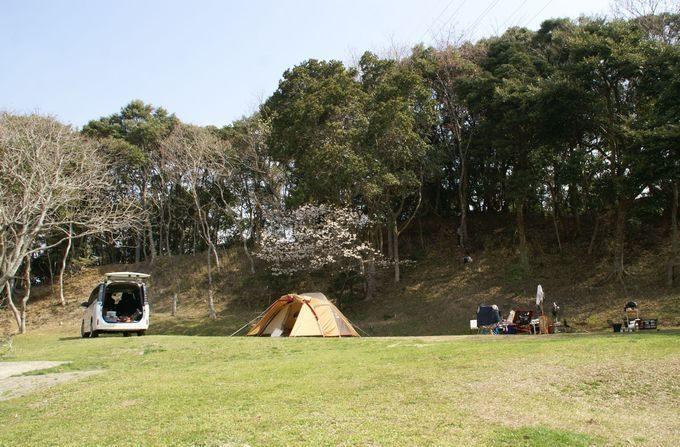 桜の下にテントを設営