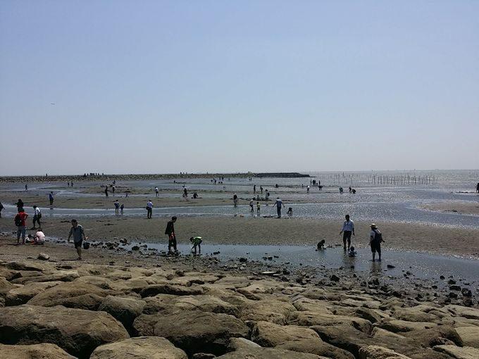 葛西臨海公園で潮干狩り
