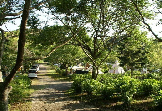 しあわせの丘リゾートキャンプ場のサイト風景