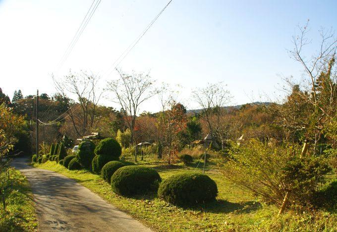 柿山田オートキャンプガーデンの雰囲気