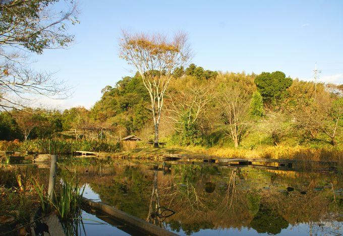 柿山田オートキャンプガーデンの池