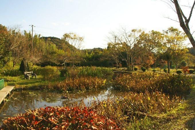 柿山田オートキャンプガーデンの池 入り口側