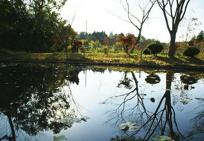 柿山田オートキャンプガーデンの池の反射