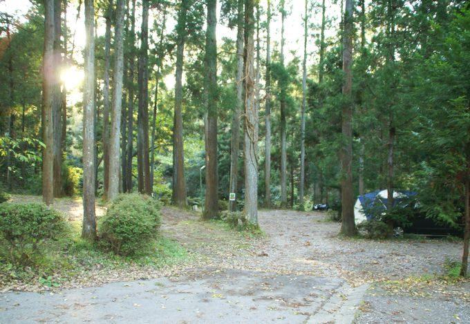柿山田オートキャンプガーデンのサイトA 森林サイト