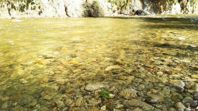 柿山田オートキャンプガーデンのサイトB 川の水