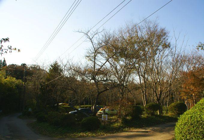 柿山田オートキャンプガーデンのサイトの雰囲気