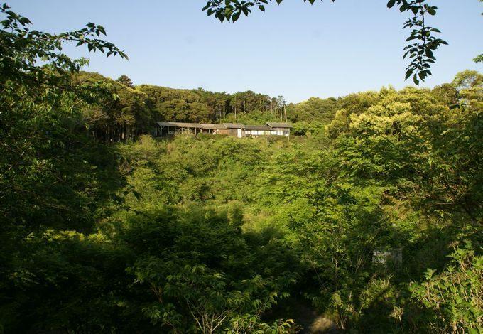 しあわせの丘リゾートキャンプ場の桜茶屋