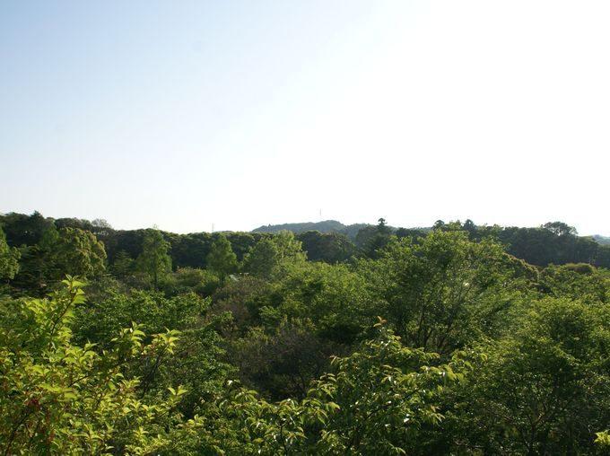 しあわせの丘リゾートキャンプ場の桜茶屋からの眺め